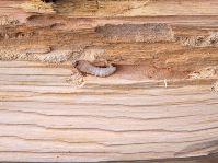 Wood-Borer-Control.jpg